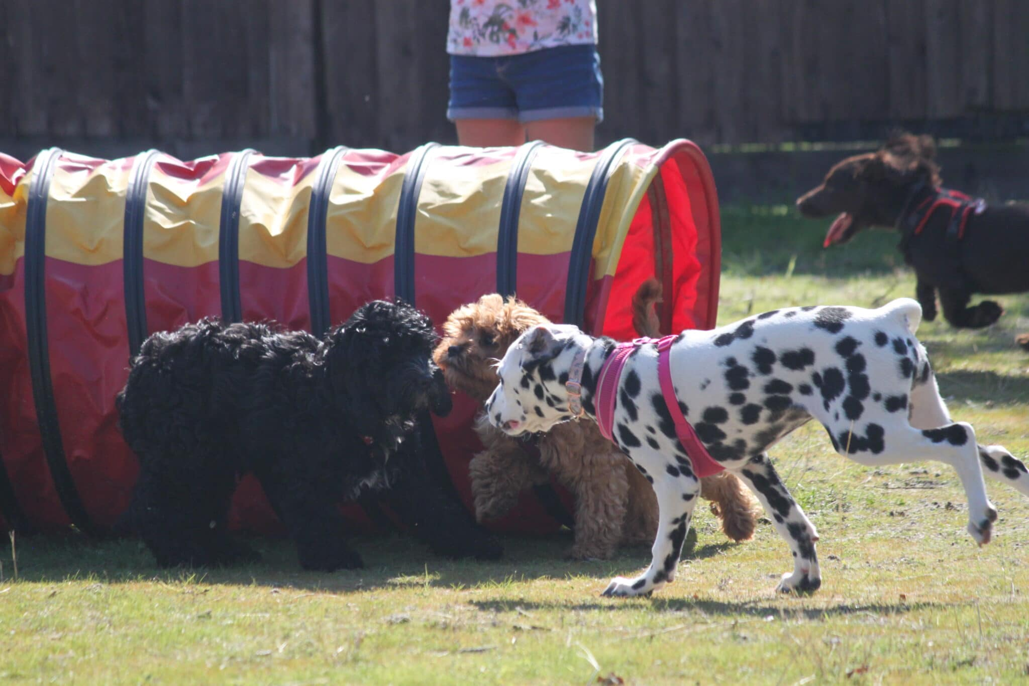 Puppy Classes - Pet Potential