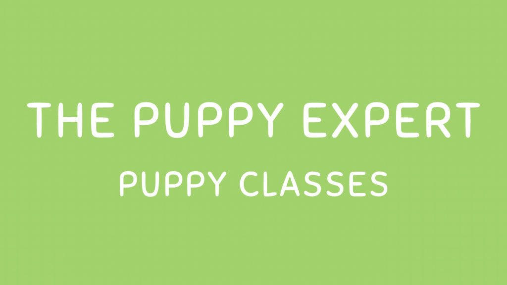 Puppy Classes Online & Lincoln